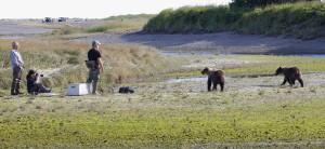 _bears getting too close