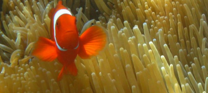 Snorkeling in the Solomon's:  Is this Close Enough?